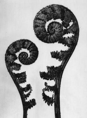 Joan Fontcuberta: Herbarium (1984)
