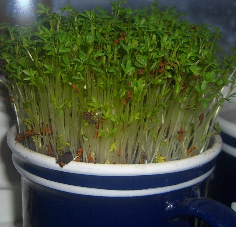 Pestovanie byliniek s deťmi