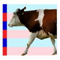 06-krava
