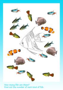 how--many-fish_01