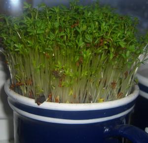 Pestujeme bylinky s detmi