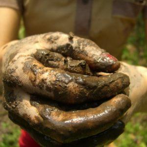 životný cyklus žaby, liahniska, uprava liahnisiek na jar